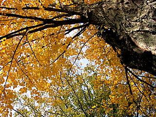 Falls leaves 2