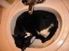 Tux_in_sink